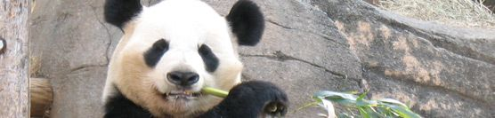 "New Bonus Added: ""SEO After Panda"" Report"